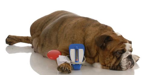 Übergewicht-beim-Hund