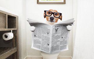 Analdrüsen beim Hund