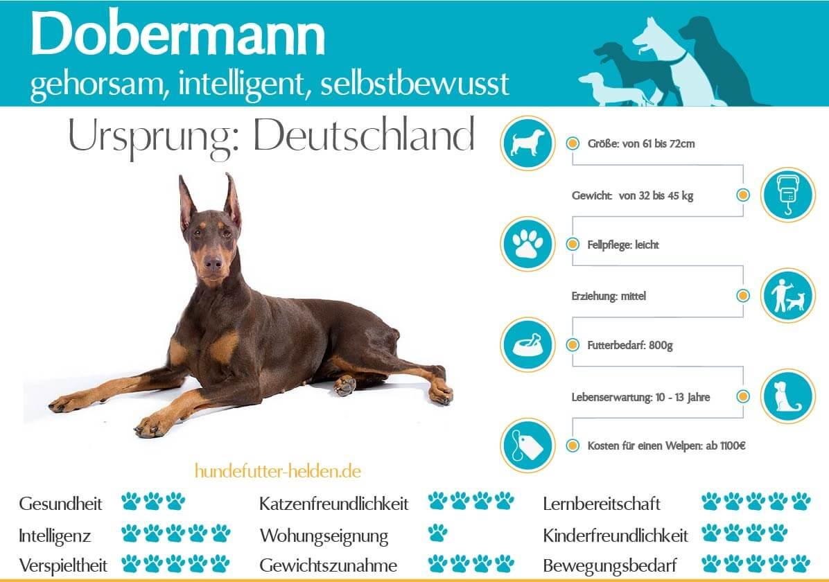 Dobbermann