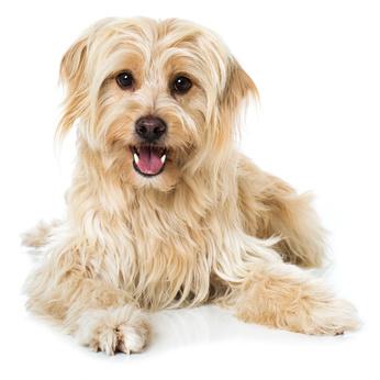 Ernährungsberatung-Hund-Fell