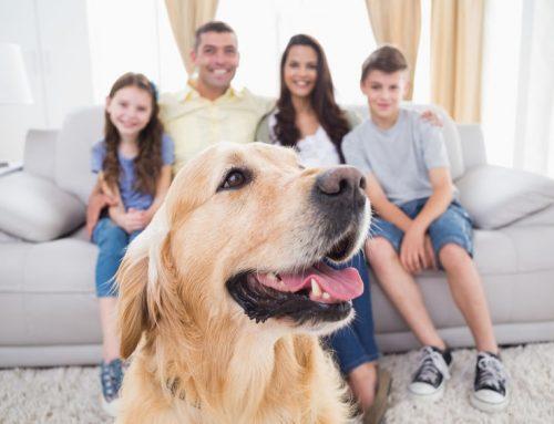 Familienhund – welche Rassen eignen sich?