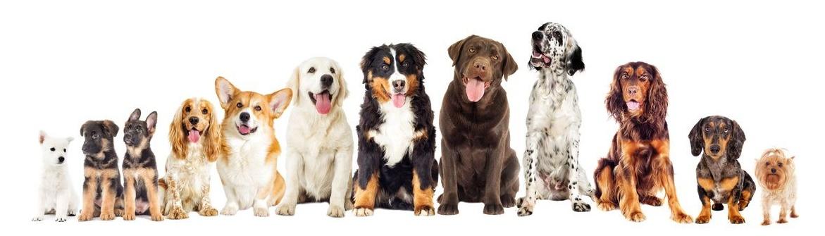 Hundefutter Vielfalt