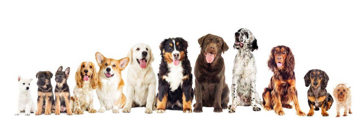 das beste hundefutter finden hundefutter helden. Black Bedroom Furniture Sets. Home Design Ideas