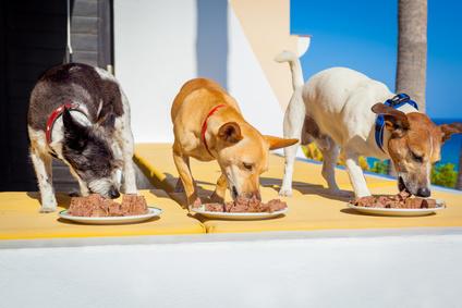 Hunde beim Nassfutter Test