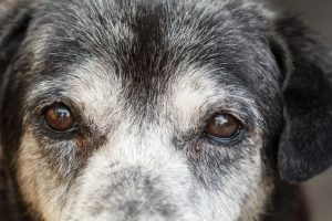 Niereninsuffizienz Hund Alter