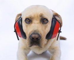 Silvester-Hund-Angst-Hilfe